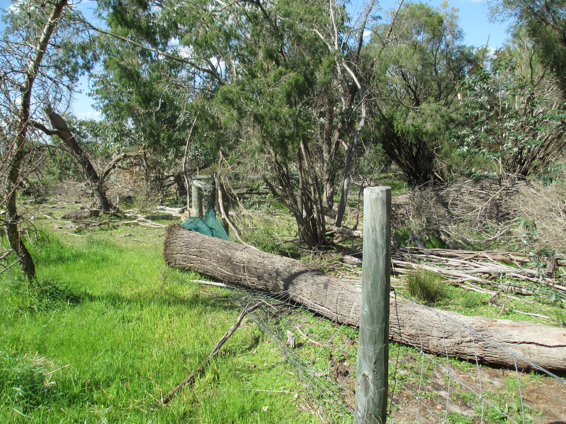 Tree fallen on orchard fence