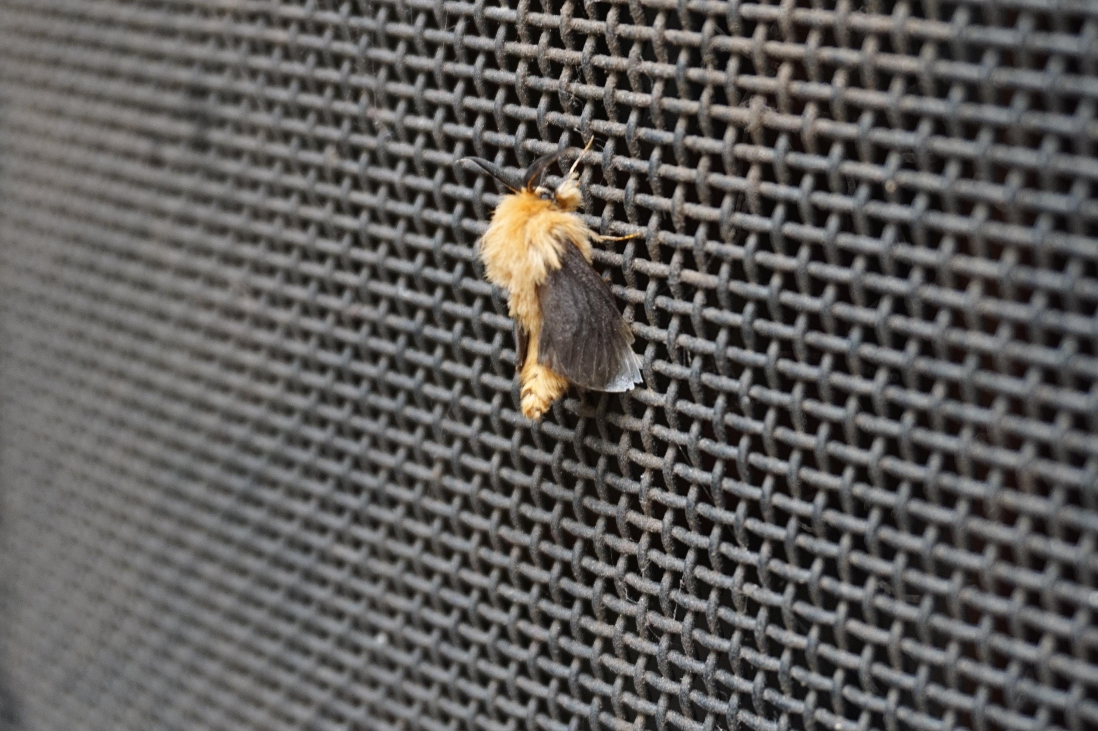 Moth on the back door
