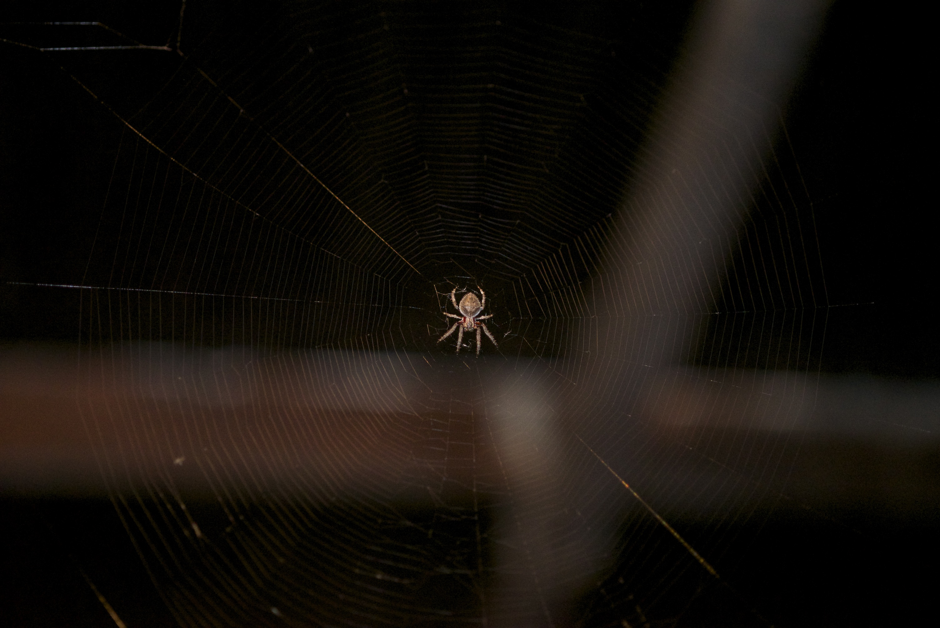 Orb weaver- love the spiders but hate walking into the webs!