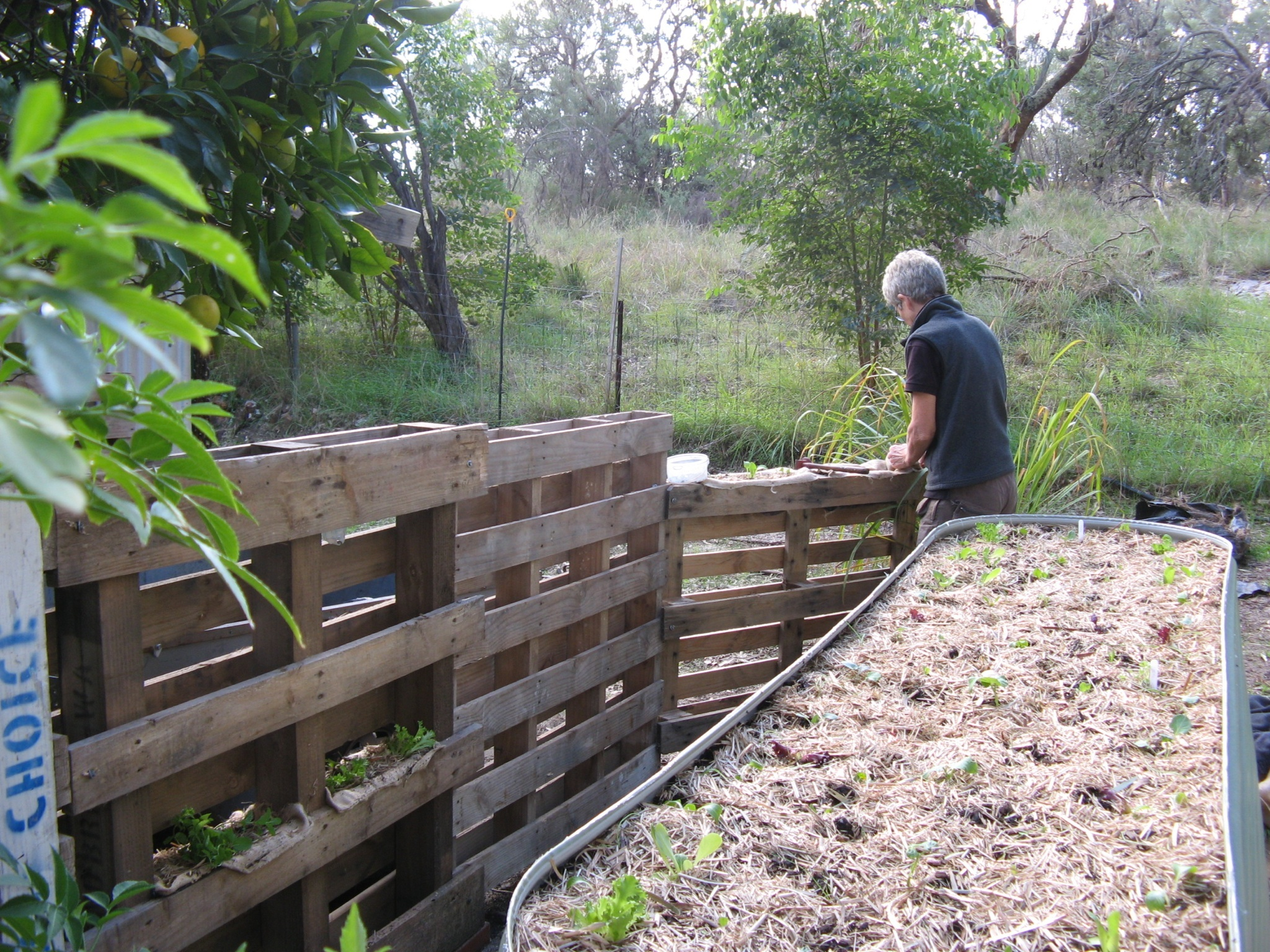 Preparing new garden beds and a pallet garden