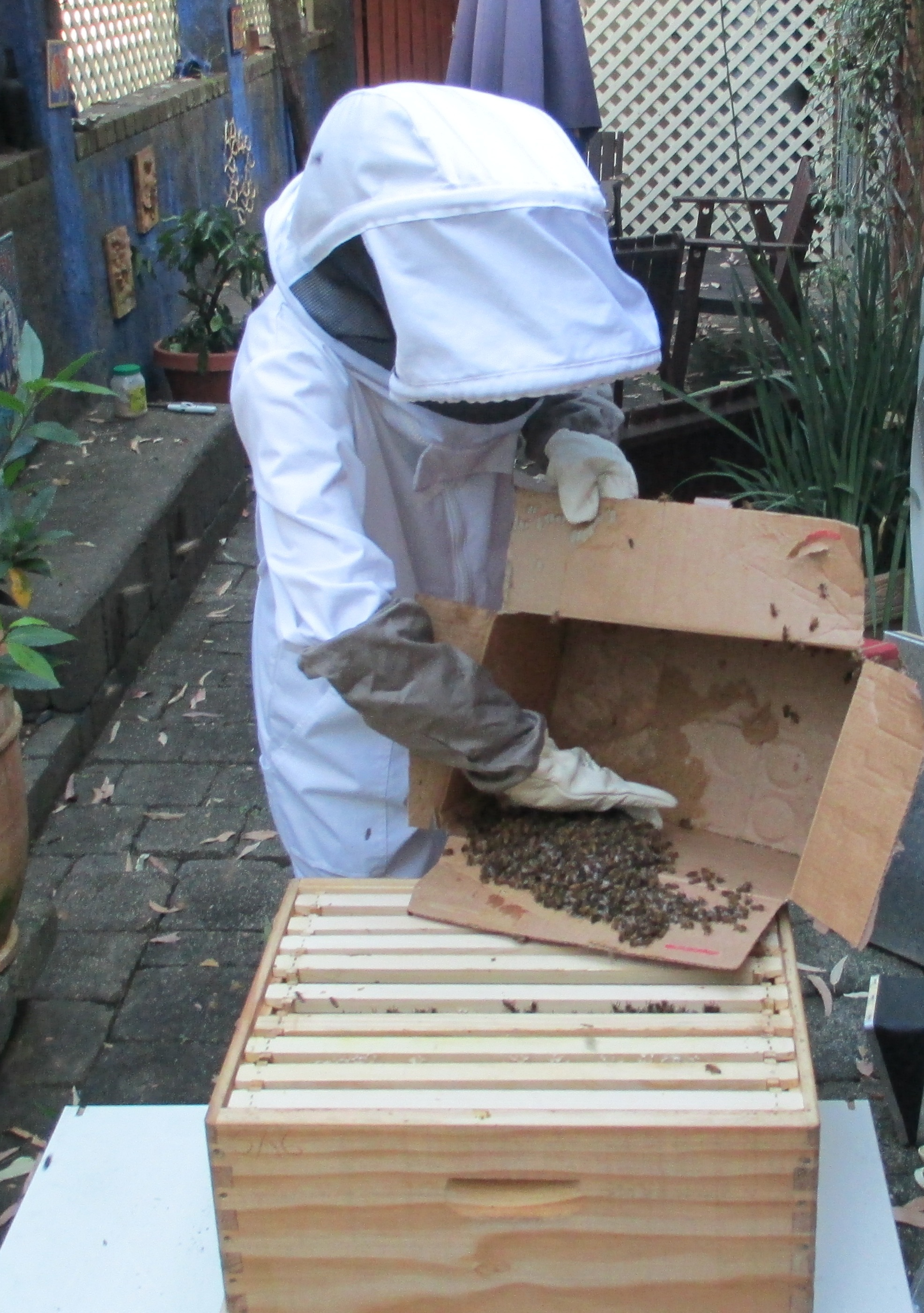 helping the remaining bees
